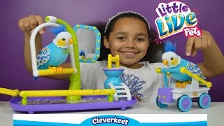 Little Live Pets Cleverkeet Parrot   Kids Toy Review   Toys AndMe