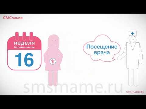 16 неделя беременности - иммунитет беременной женщины, дополнительные обследования.