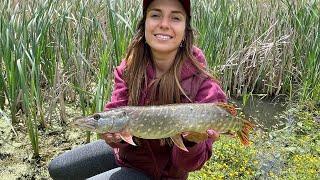 Рыбалка на щуку в начале лета ЩУКА НА СПИННИНГ