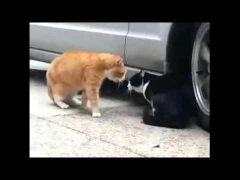 Орет как мартовский кот