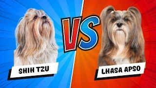 Lhasa Apso vs. Shih Tzu  Which is Better? Dog vs Dog