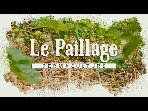 Le rôle du paillage dans le jardin permaculture ?