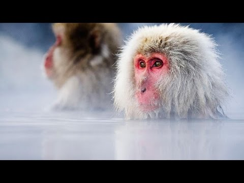 Japan (National Geographic)