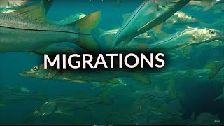 Migrations Part 2: Snook
