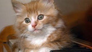 Прикольное, смешное видео про кошек.