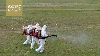 Inner Mongolia battles destructive swarms of locusts
