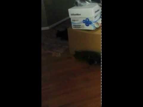cats declawing procedure
