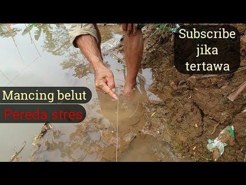 Video Mancing Belut Extra Kocak