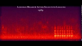 Lincoln Meadow 1989, Bernie Krause