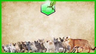 Cat Breed Size Comparison