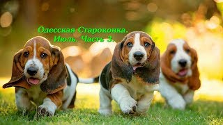 Рынок собак. Июль. Часть 3. Одесский Староконный рынок животных. Собака. Кошка. Продажа животных.