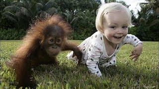 Смешные Обезьянки и Дети! Funny Monkeys and Children!(По вопросам авторства обращайтесь 9142-3@inbox.ru , все вопросы решаемы, мирно! )))) Смешные Обезьянки и Дети! Funny..., 2014-12-08T11:30:18.000Z)