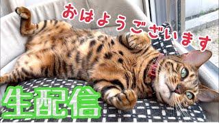 【モーニング生配信6/22】お出かけ直前の猫達の様子を生配信