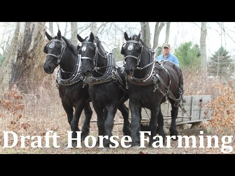 Horse Drawn Farming At Riceland Meadows Farm