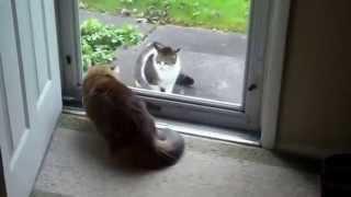 Драка котов насмерть.  Funny cats