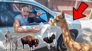 HAND FEEDING SAFARI DRIVE-THRU ANIMALS!! *attacked*