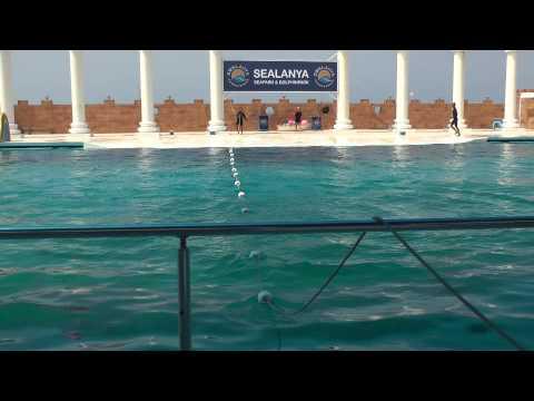 Alanya Seapark, Dolphin show, Long Beach Hotel 2013