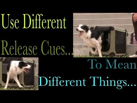 different-release-words---clicker-dog-training