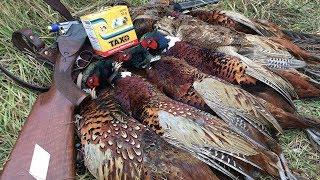 Охота на фазана, вальдшнепа  и зайца | Красивые выстрелы на номере!