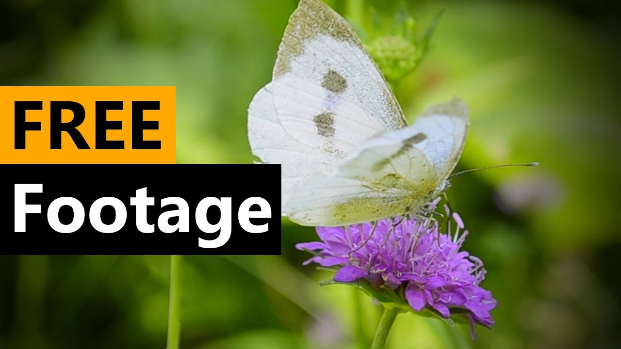 Butterfly - FREE Stock Video Footage [Download Full HD]