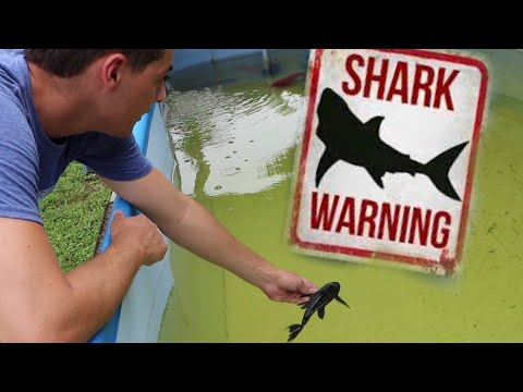 JAWS VS ALIEN (ATTACKING NEW PETS)