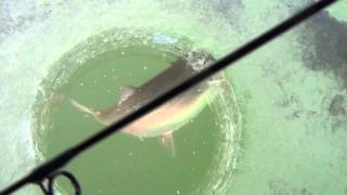 Crazy Russian Trout Fishing