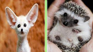 Cute Baby Animals - Baby - Puppies -   #3
