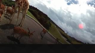 「九州自然動物公園 アフリカンサファリ」×「NTTドコモ」×「OBS」による...