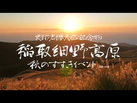 秋は細野高原のすすきを見に来ませんか?|伊豆稲取ストーンチェアキャンプ場