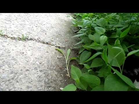 видео: Домашний Кот упал с балкона.