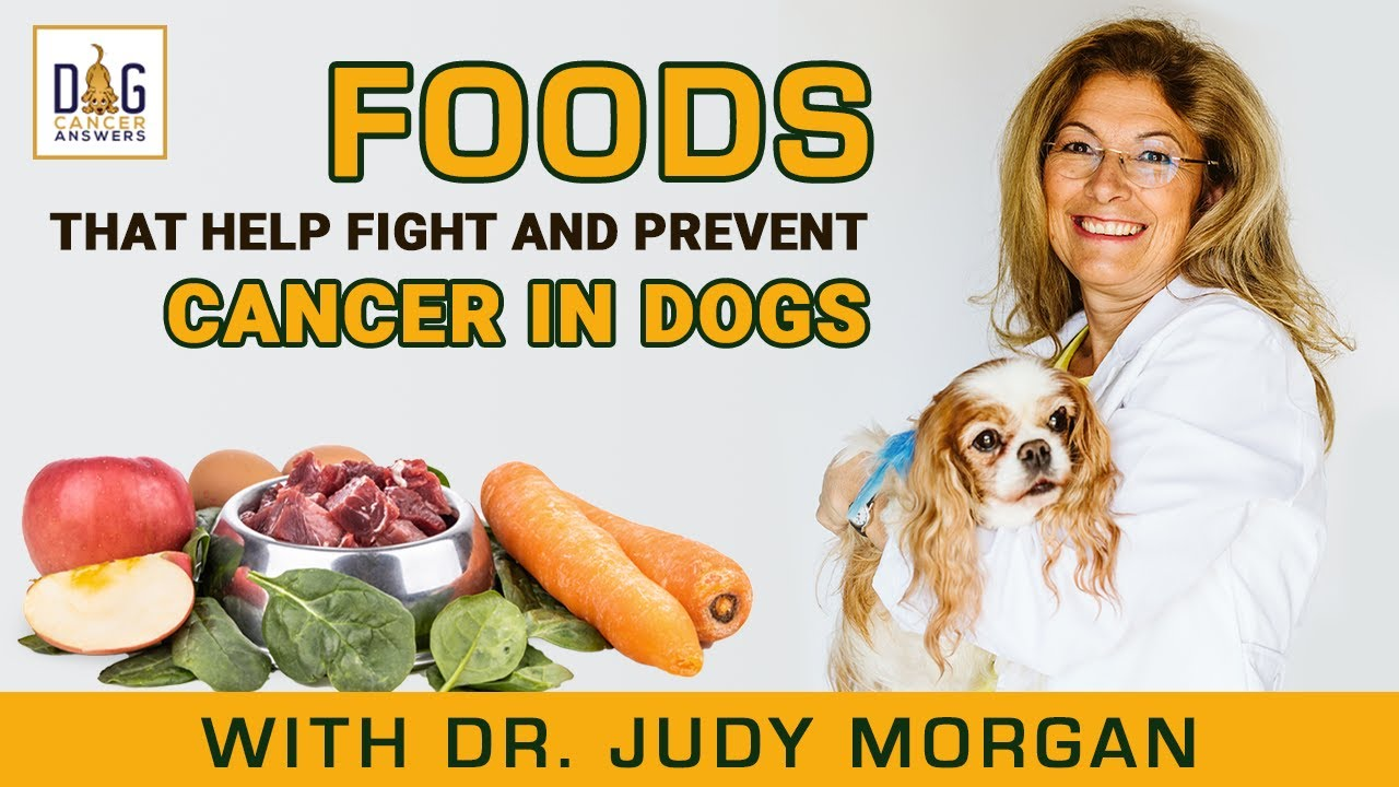 Foods That Help Fight and Prevent Cancer in Dogs │ Dr. Judy Morgan Deep Dive