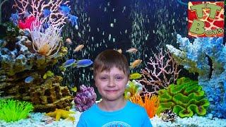 ВЛОГ Едем с Игорьком в Океанариум - Акулы, Дельфины Видео для детей / Aquarium Review