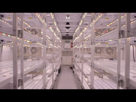 AmplifiedAg Increases Better Fresh Farms Production 50% with New Indoor Farm and AmpEDGE Operating System