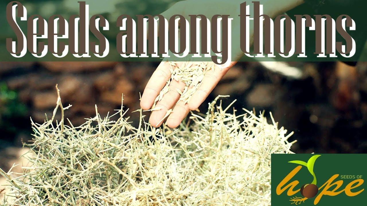 Seeds among thorns