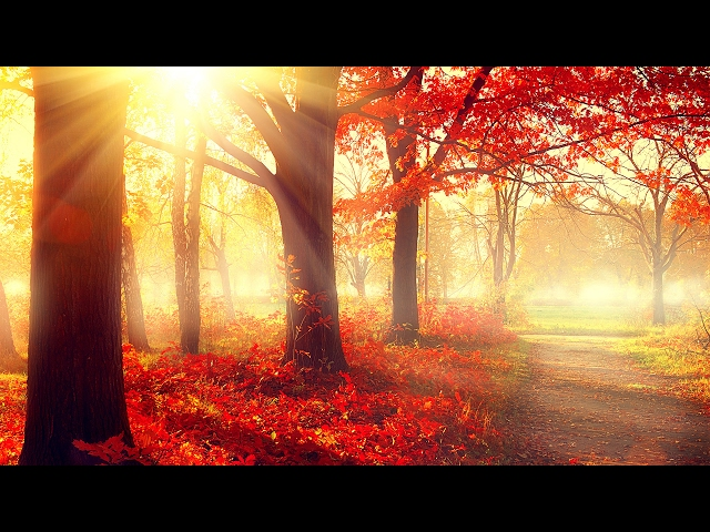 Relaxing Piano Music for Studying Concentration | Study Music | Instrumental Studying Music