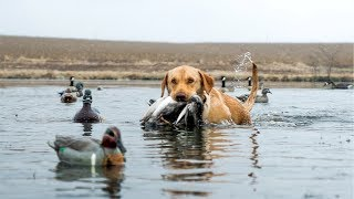 Pond Duck Hunting in a SNOW STORM!!!
