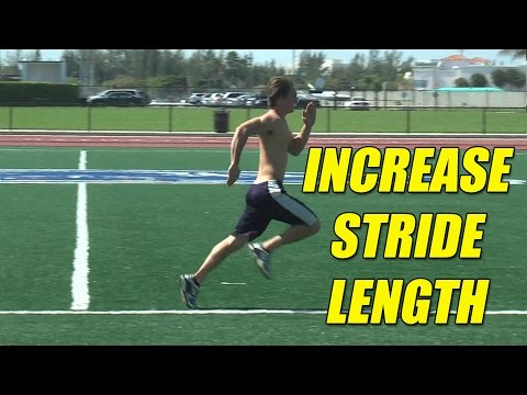 Increase stride length and turnover rate. Hip Flexor Muscles.
