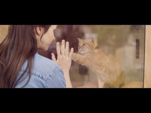 """【YKK AP公式】窓と猫の物語 「幼なじみ」篇 30秒 Story of a window and a cat """"childhood friend"""""""