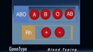 Dieta Genotipo: Determinando el Grupo Sanguíneo