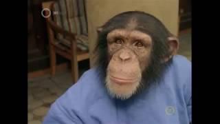 Pörögnek a majmok - A majmok bolygója: Lázadás kritikája