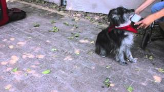 Training Assistance Dogs : Dog Training & Basic Obedience