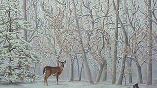IMAGENES OCULTAS. Un ciervo en bosque nevado