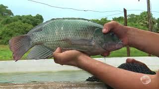 Nova técnica permite criação de peixes com economia thumbnail