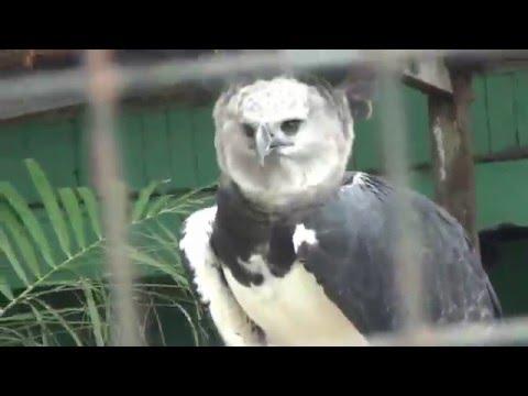 Guyana zoo & botanic gardens