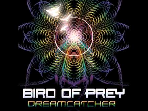 Bird of Prey - Kiva