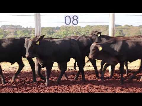 Leilão Machadinho Lote 08