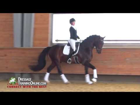 how to become a dressage judge