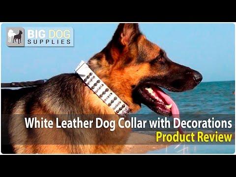 German Shepherd and American Bulldog Wearing White Decorated Dog Collar