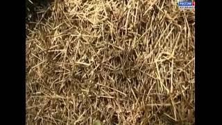 Полезные рыжие муравьи