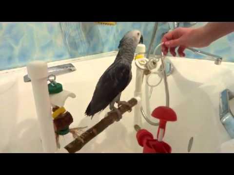 Попугаи, птицы, клетки, беларусь. Объявления категории